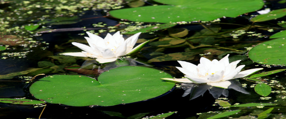 lilieswebsiteresizze